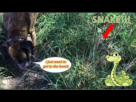Akira Encounters Snake At The Beach!