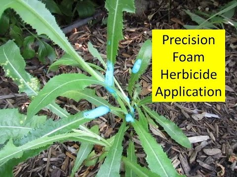 How to Kill Weeds in Flower Beds without Killing Flowers