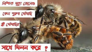 নিশ্চিত মৃত্যু জেনেও পুরুষ মৌমাছি কেন স্ত্রী মৌমাছির সাথে মিলন করে? amazing honey bee
