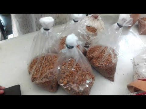 How to make mushroom seed   মাশরুম এর বীচ তৈরি পদ্ধতি   مشروم بیج بنانے کا طریقہ   Handicrafts.BD