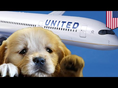 United puts dog on wrong plane, mistake adds two hours to flight - TomoNews