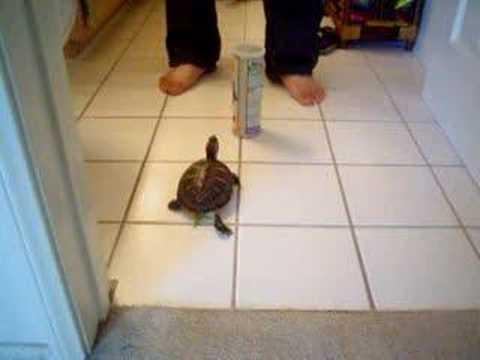 My turtle following me