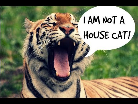 Top 10 Wild Animal Pets - Dangerous Wild Animals you can own as pets!!!