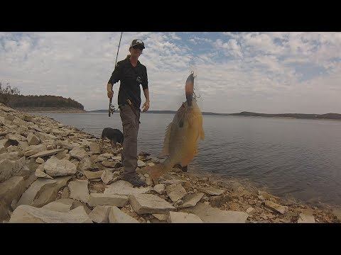 Bluegill Fishing For Flathead Catfish Bait - Fall Perch Fishing From The Lake Shore With Crankbaits