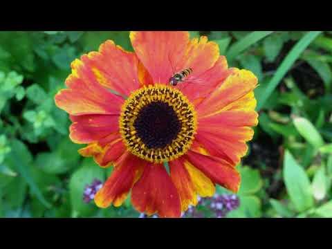 Why You Should Grow a Pollinator Strip