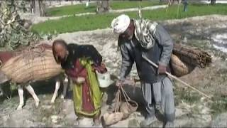 film balochi chor