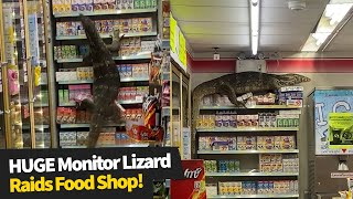HUGE monitor lizard raids supermarket in search of food