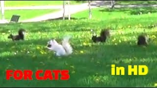 Vídeo para Gatos - pájaros, ardillas, conejos, ardillas, palomas,