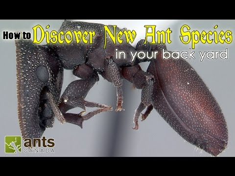 HOW TO DISCOVER A NEW SPECIES OF ANT | featuring Dr. Brian Fisher