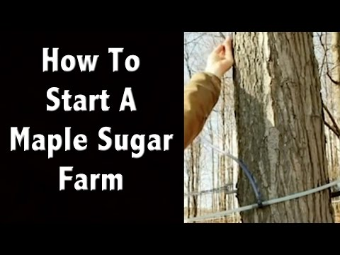 How To Start A Maple Sugar Farm - Off Grid Living