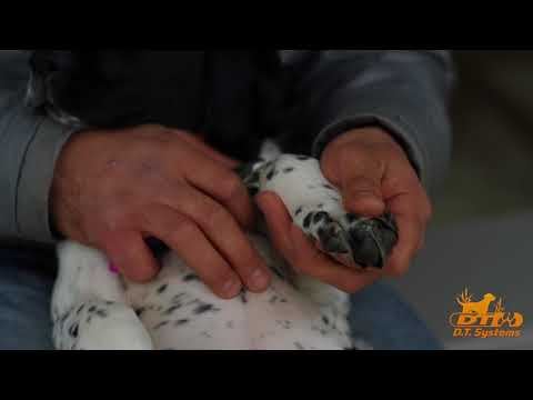 Puppy Nail Trimming, how to trim your puppy's nails