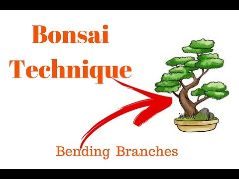 Bonsai Lesson/Bending Young Branches & trunks by Tool/Bonsai Hunter(in English and Hindi)