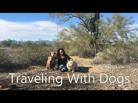 Tips on Traveling With Dogs-Keeping Them Safe, Healthy & Happy