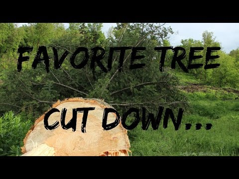 DIY Home Build: Favorite Tree Cut Down For The House...