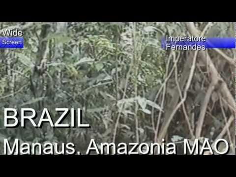 BRAZIL Manaus Amazonia