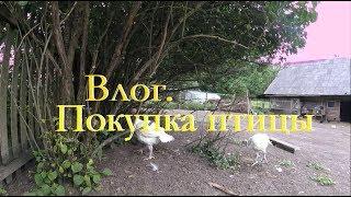 Деревенские будни. Птичий влог. \\ Жизнь в деревне