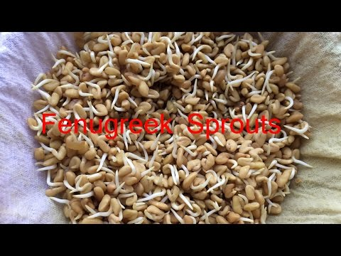 How to sprout fenugreek methi seeds