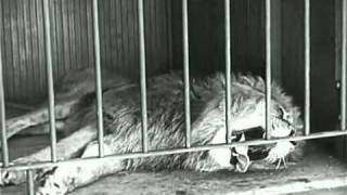Charlie Chaplin   The Lion's Cage    مضحك.ضحك . شارلي شابلن - 13
