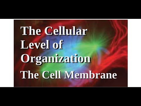 The Cellular Level of Organization - The Cell Membrane