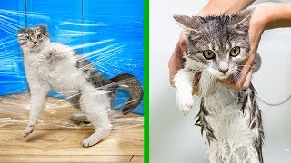 14 Life Hacks For Cats!