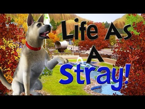 The Sims 3 Life as a Stray! Trailer!
