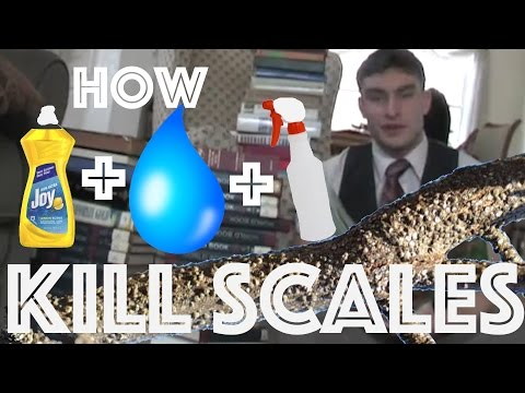 How To Kill Scales On Plants