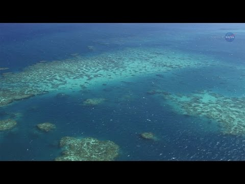 ScienceCasts: A New View of Coral Reefs
