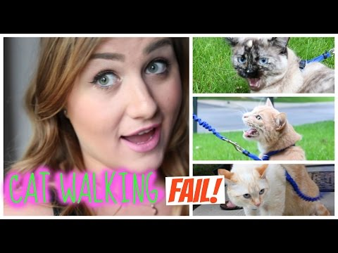 Do Indoor Cats Want to Go Outside?! Cat Walking FAIL!