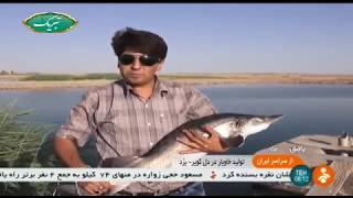 Iran Sturgeon fish farming in desert, Bafq county پرورش ماهيان خاوياري در كوير بافق ايران