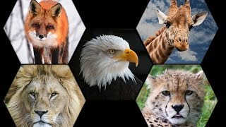 What Are Pet Animals, Domestic Animals And Wild Animals? | Animals For Kids | Periwinkle