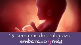 6aae967ad 15 semanas de embarazo - Cuarto mes - EMBARAZOYMAS