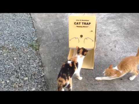 Live Cat trap