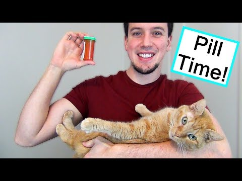 How to Give Your Cat a Pill the EASY Way!