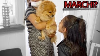 DID WE FINALLY FIND OUR LOST PUPPY MARCH POM | Familia Diamond