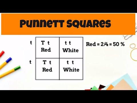 Punnett Square Basics ( monohybrid cross)