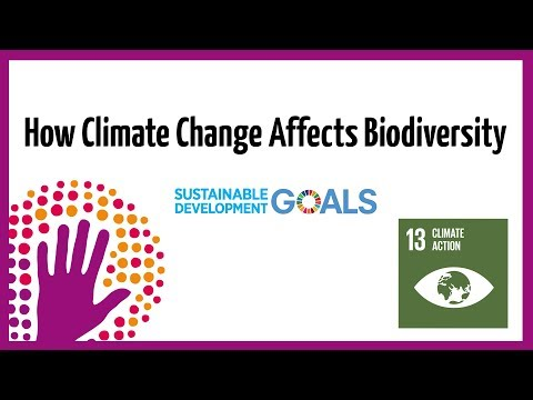 How Climate Change Affects Biodiversity