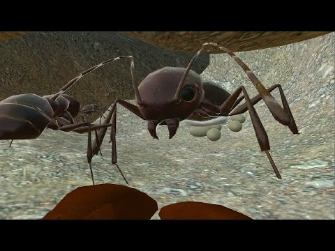 Ant Simulator 3D Full -Life of Ants- Android / iOS - Gameplay
