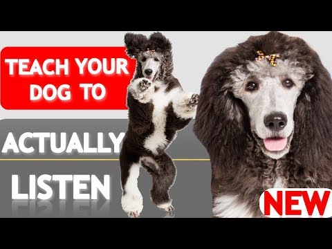 How to Teach Your Puppy to ACTUALLY Listen to You When it Counts! (Real Life