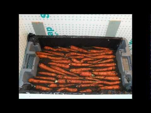 bayman's blog : growing and storing carrots