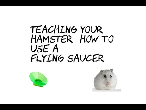 Teaching Your Hamster How To Use A Flying Saucer