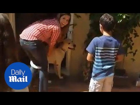 Tear-jerking moment family is returned with missing dog - Daily Mail