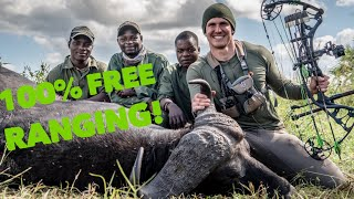 Totally FREE RANGE Cape buffalo W/ a BOW! Mozambique Africa   Bowmar Bowhunting  