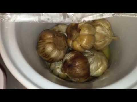 Sneak Peek at Black Garlic Progress: Week 1