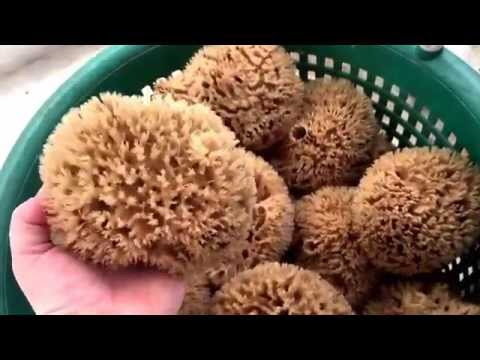 Rock Island Sheep Wool Full Forms  Tropical Sea Sponges