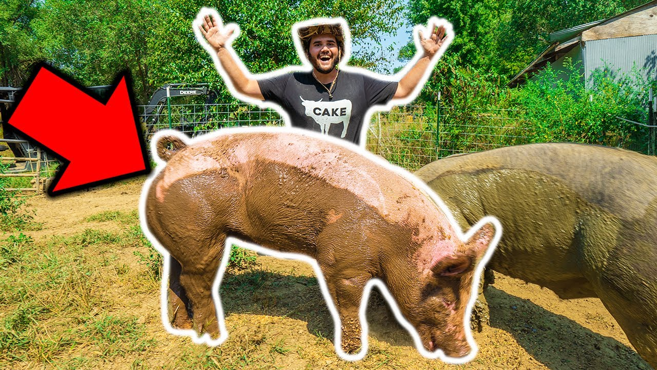 Backyard Farm GIANT PET PIG Catch Clean Cook!!! (RIP)