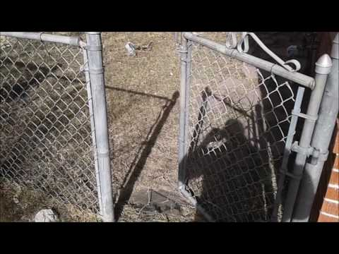 Chain Link Fence & Gate Repair Aurora