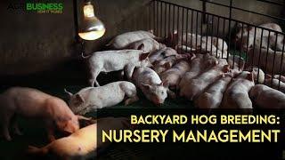 Backyard Hog Fattening: Grower to Finisher | Agribusiness B