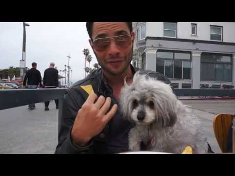 Tessa The Blind Dog Steals Justin Silver's Lunch