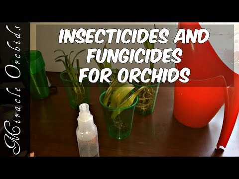 Which insecticides and fungicides should we use for our orchids?? Pest and disease control treatment