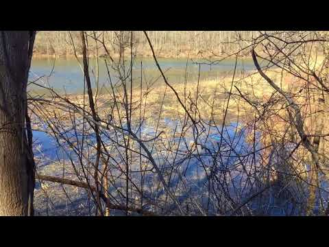 Listen to the spring peepers on a Central New York pond
